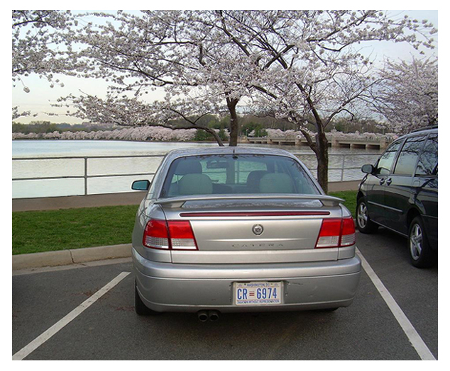 Cadillac Catera parked at the Tidal Basin with flowering cherry trees